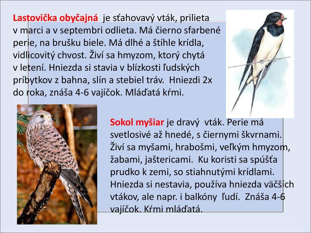 Biele mláďatá a veľké čierne vtáky